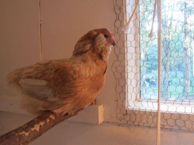 Goldie - in her earlier years